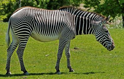 2011-06-02 - Toronto Zoo - 003