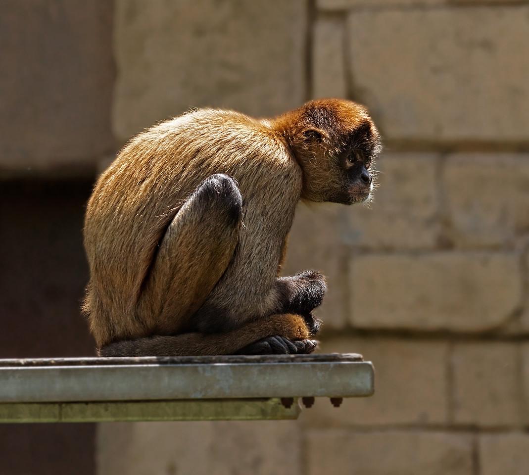 2011-06-10 - Toronto Zoo - 052