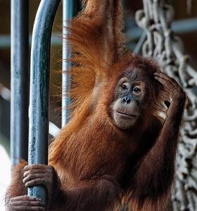 2011-06-02 - Toronto Zoo - 024
