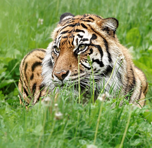 2011-06-02 - Toronto Zoo - 018