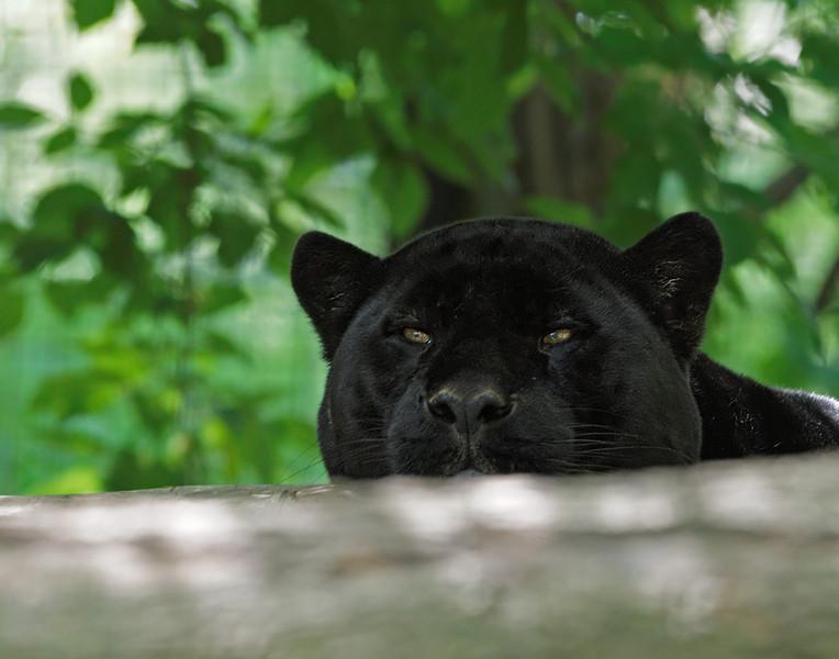 2011-06-10 - Toronto Zoo - 051