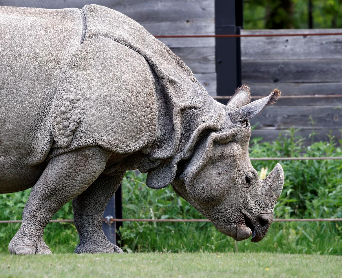 2011-06-02 - Toronto Zoo - 016
