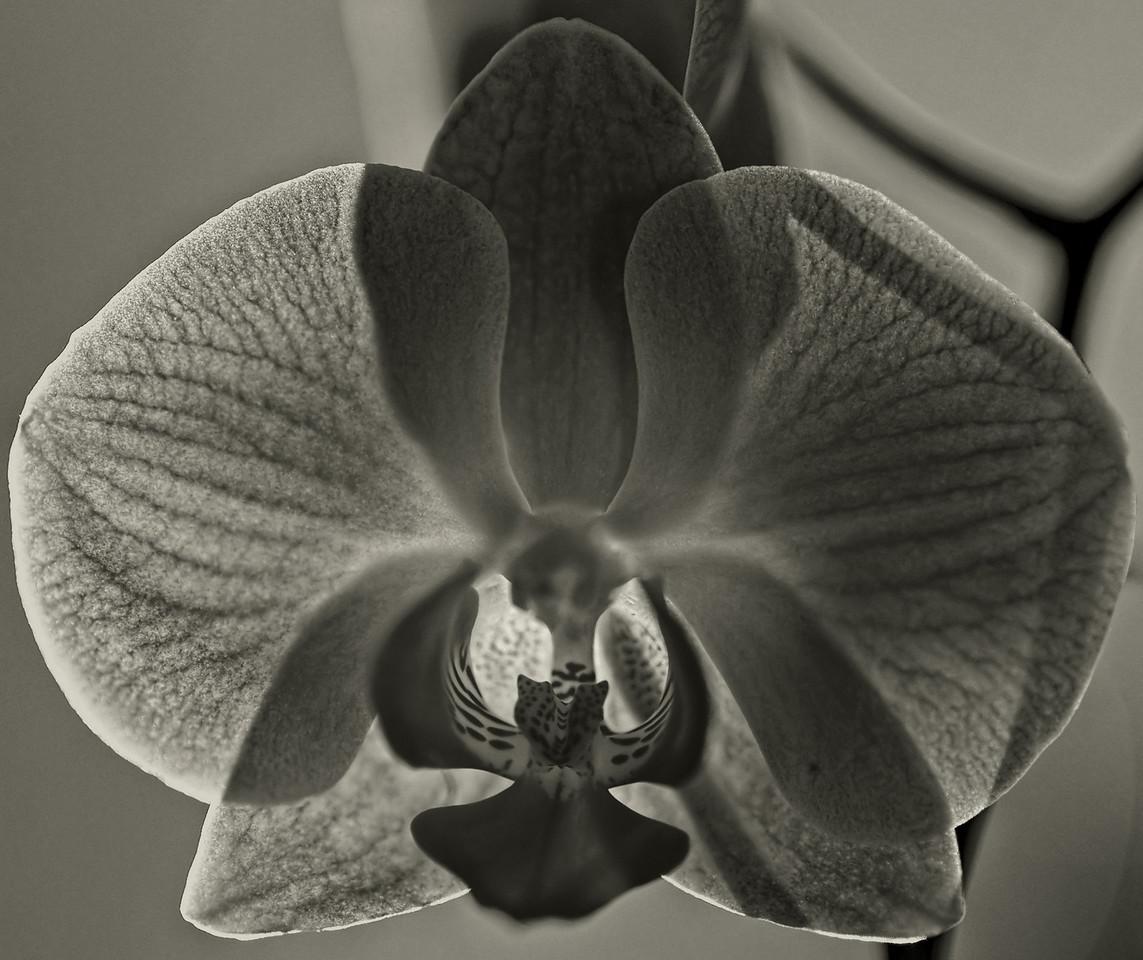 2011-10-02 - Monochrome - 012