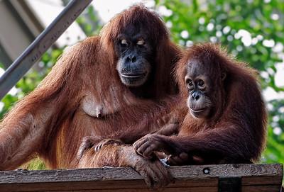 2011-06-02 - Toronto Zoo - 022