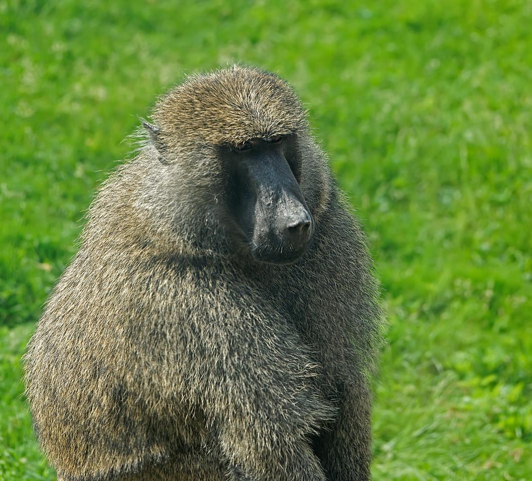 2011-06-10 - Toronto Zoo - 027