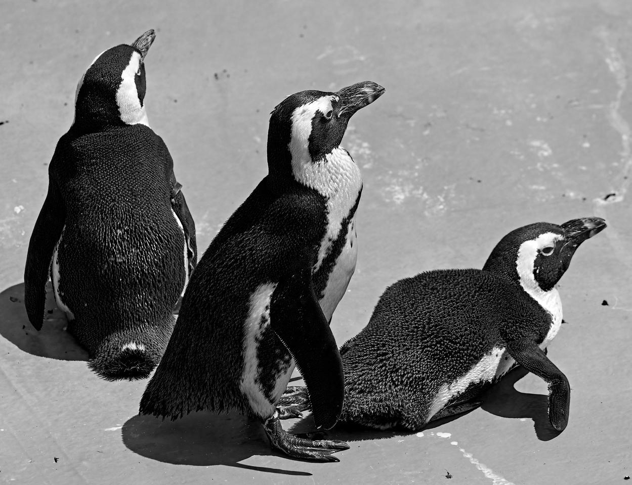 2011-06-02 - Toronto Zoo - 009