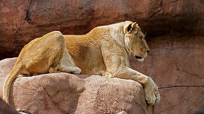 2011-06-10 - Toronto Zoo - 034
