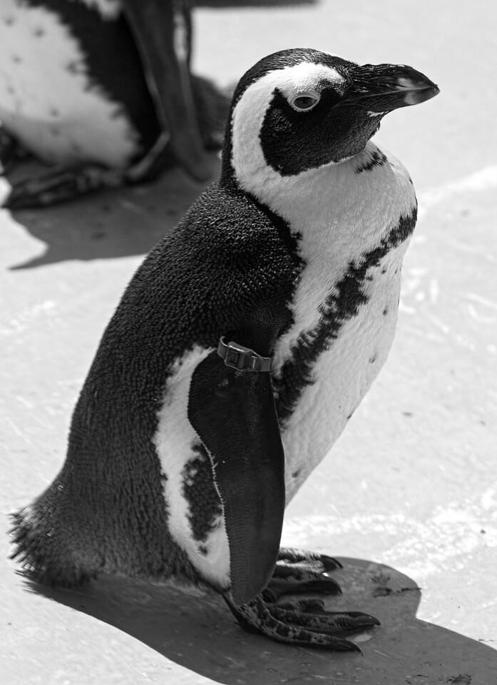 2011-06-02 - Toronto Zoo - 007