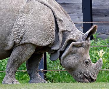 2011-06-02 - Toronto Zoo - 015