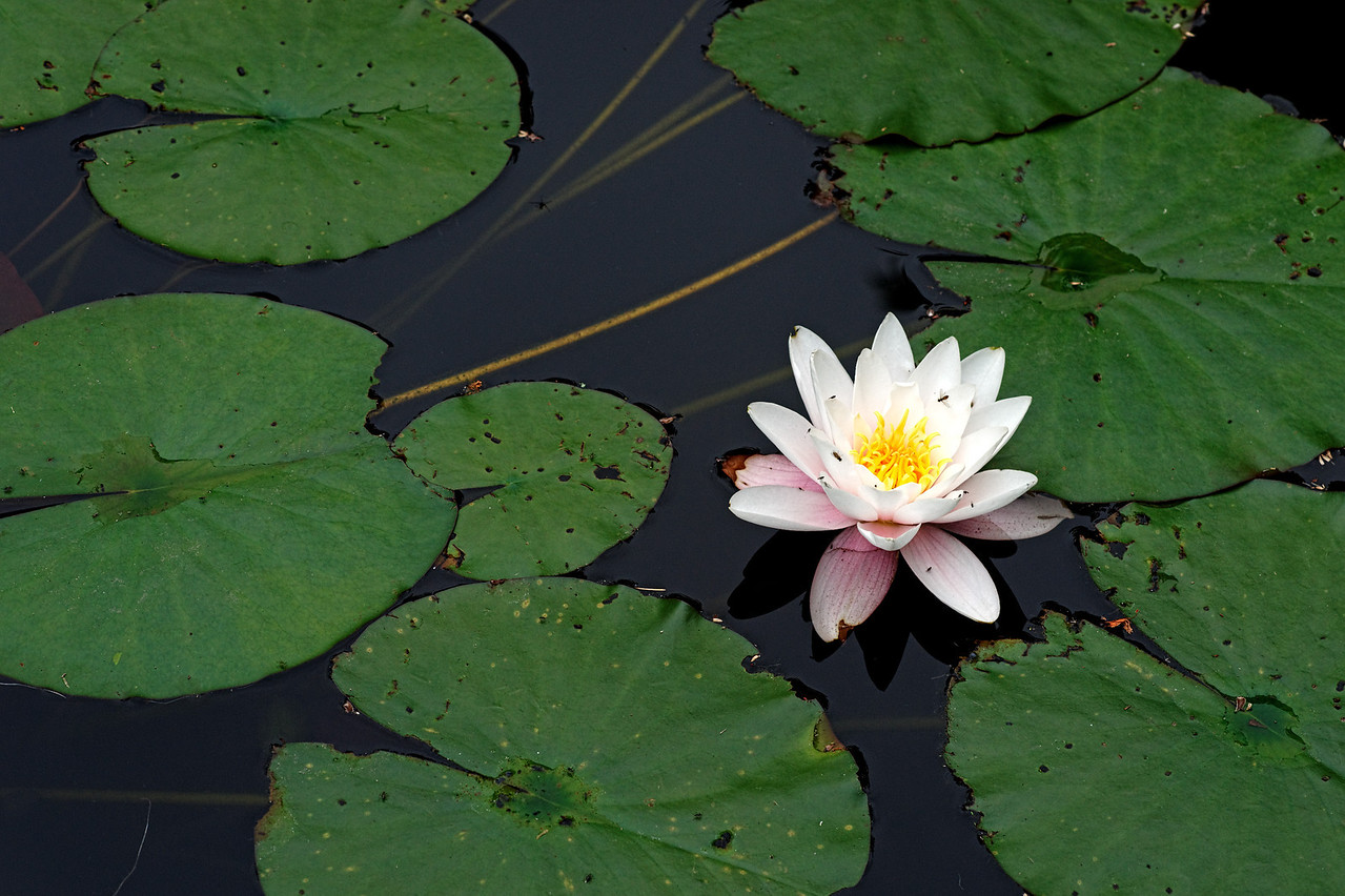 2011-06-29 - Niagara Botanical Gardens - 048