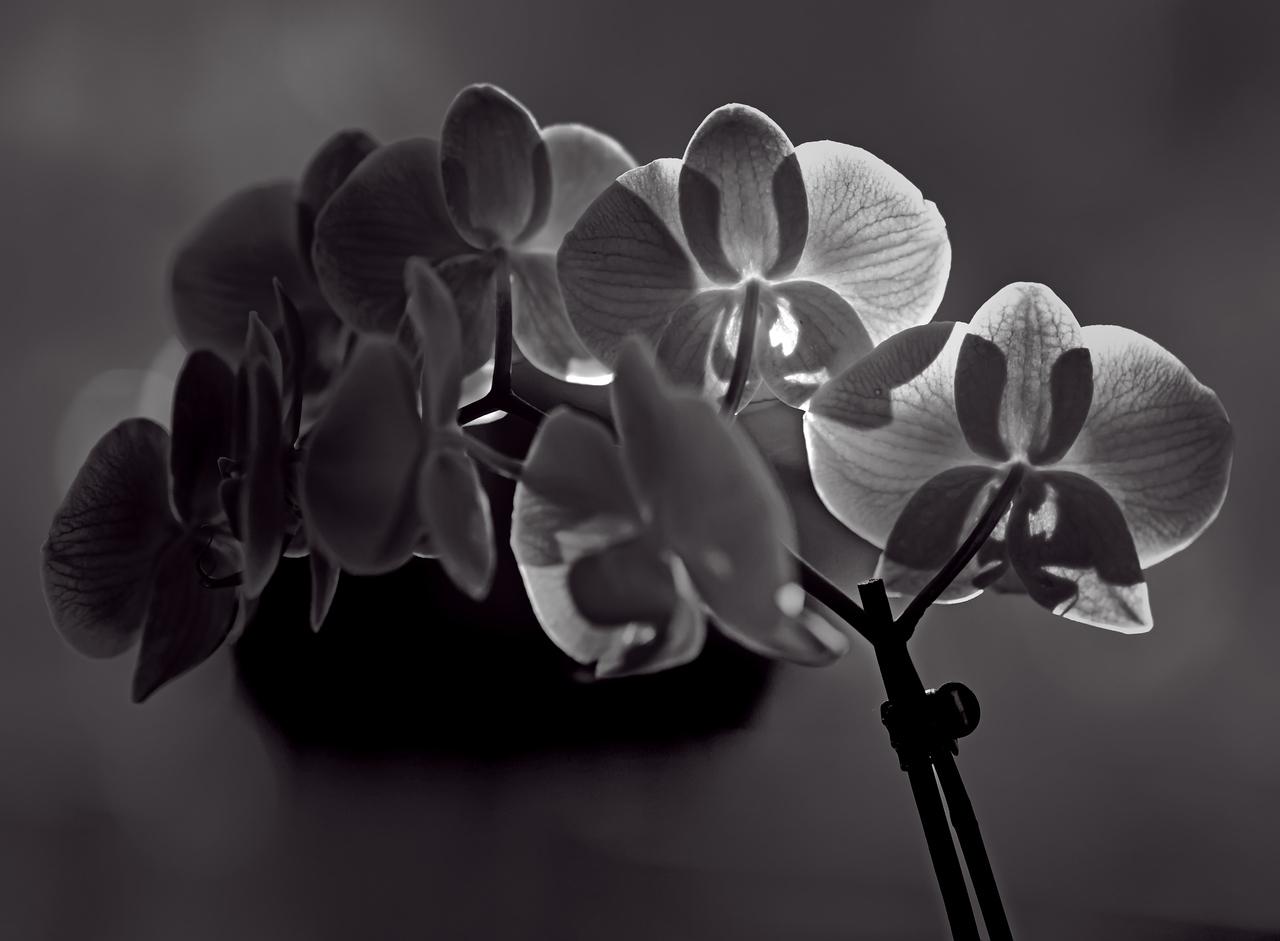2011-10-02 - Monochrome - 014