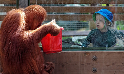2011-06-10 - Toronto Zoo - 017