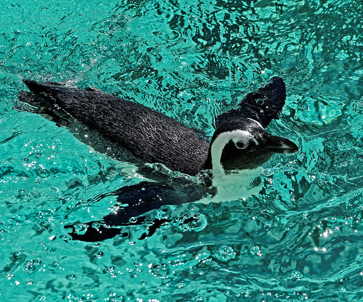 2011-06-02 - Toronto Zoo - 012