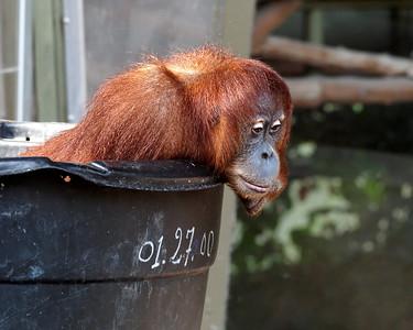 2011-06-10 - Toronto Zoo - 011