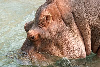 2011-06-10 - Toronto Zoo - 023