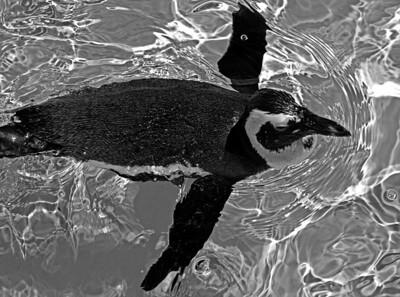 2011-06-02 - Toronto Zoo - 013