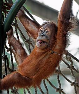 2011-06-10 - Toronto Zoo - 016
