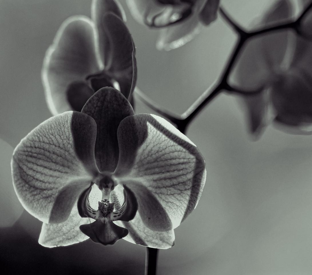 2011-10-02 - Monochrome - 009