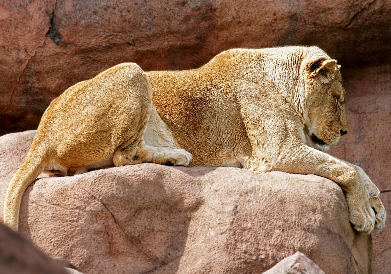 2011-06-10 - Toronto Zoo - 033