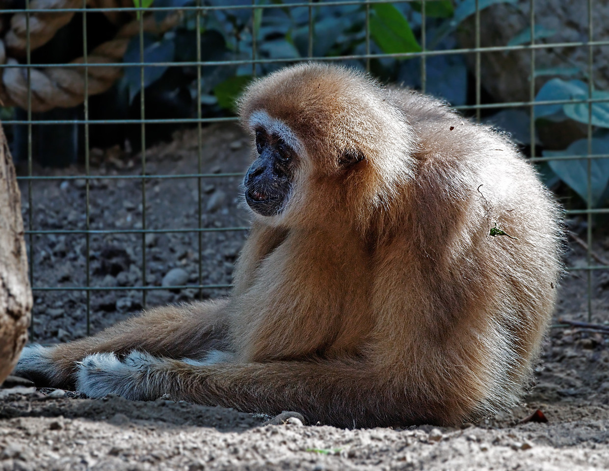 2011-06-10 - Toronto Zoo - 019