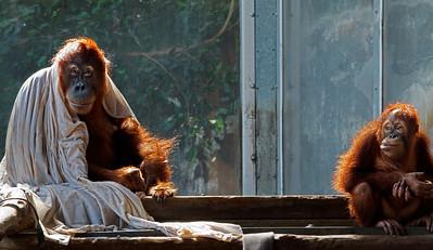 2011-06-10 - Toronto Zoo - 018