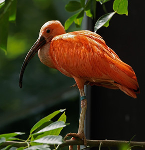 2011-06-10 - Toronto Zoo - 038