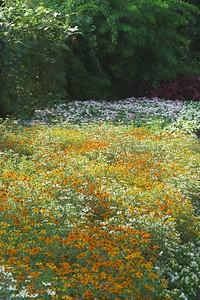 Edward Gardens - August 07