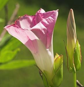 Edward Gardens - August 17