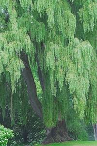 Edward Gardens - August 01