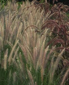 Edward Gardens - August 09