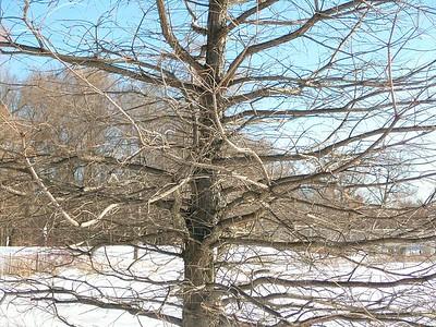 Feb 8 - 27 - Gravity Defying Branches