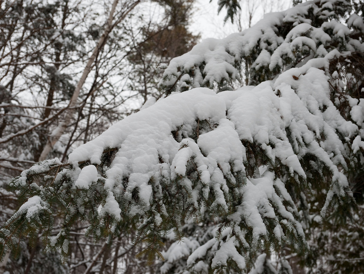 Edward Gardens 18 January - 28