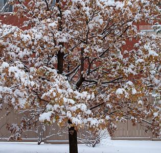 First Snow November 19 - 10