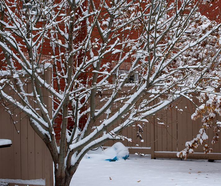 First Snow November 19 - 11