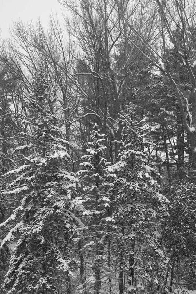 Edward Gardens 18 January - 38