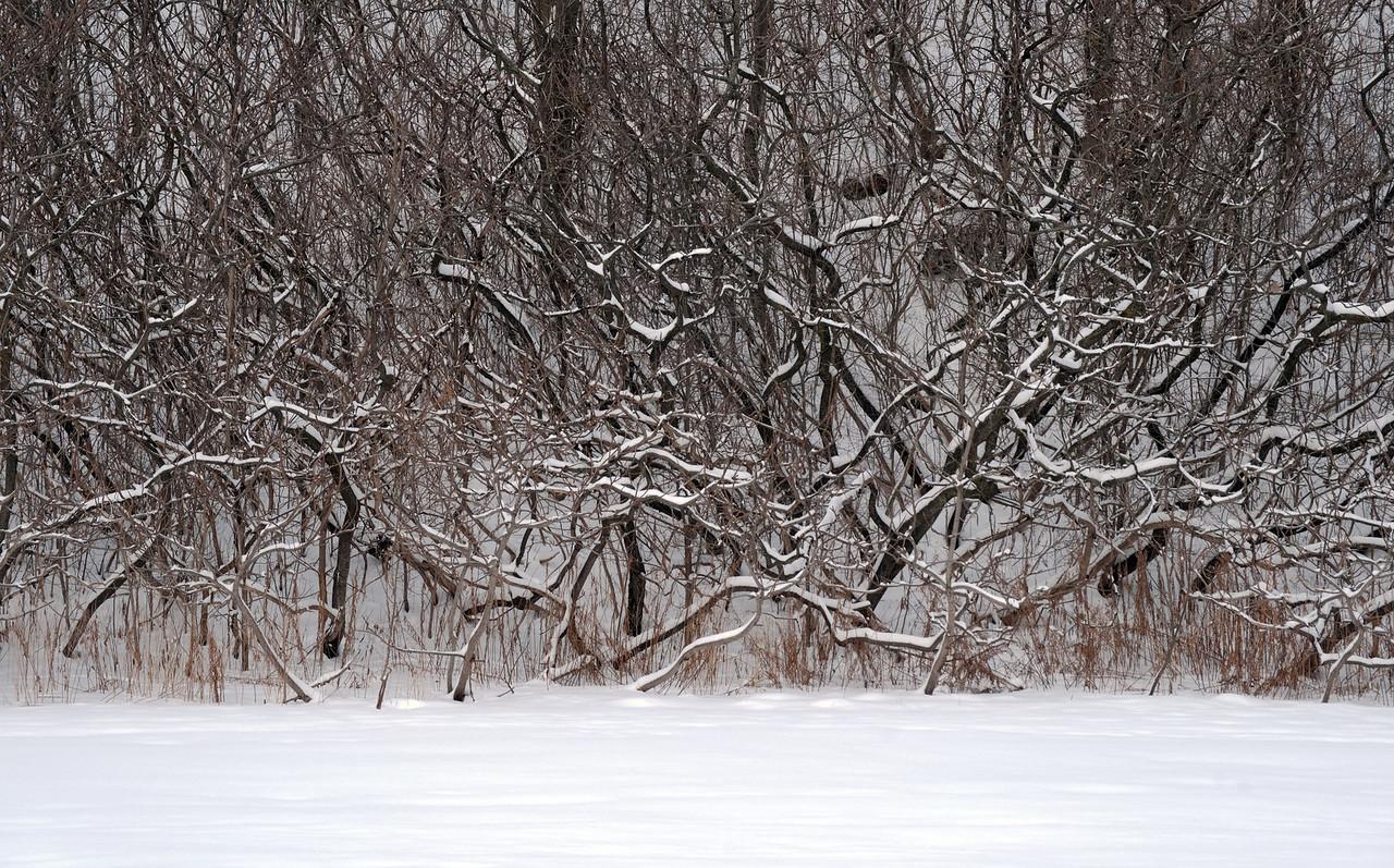Pomona Park Mid January - 51