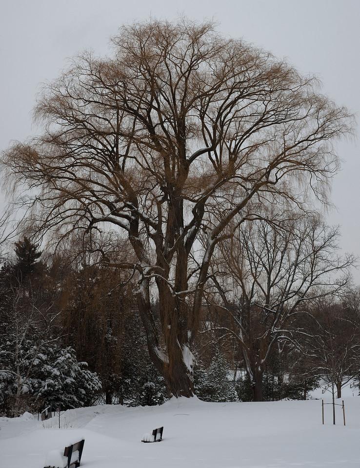 Edward Gardens 18 January - 02