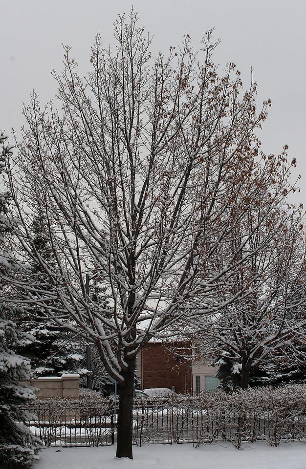 First Snow November 19 - 13