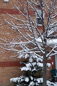 First Snow November 19 - 05