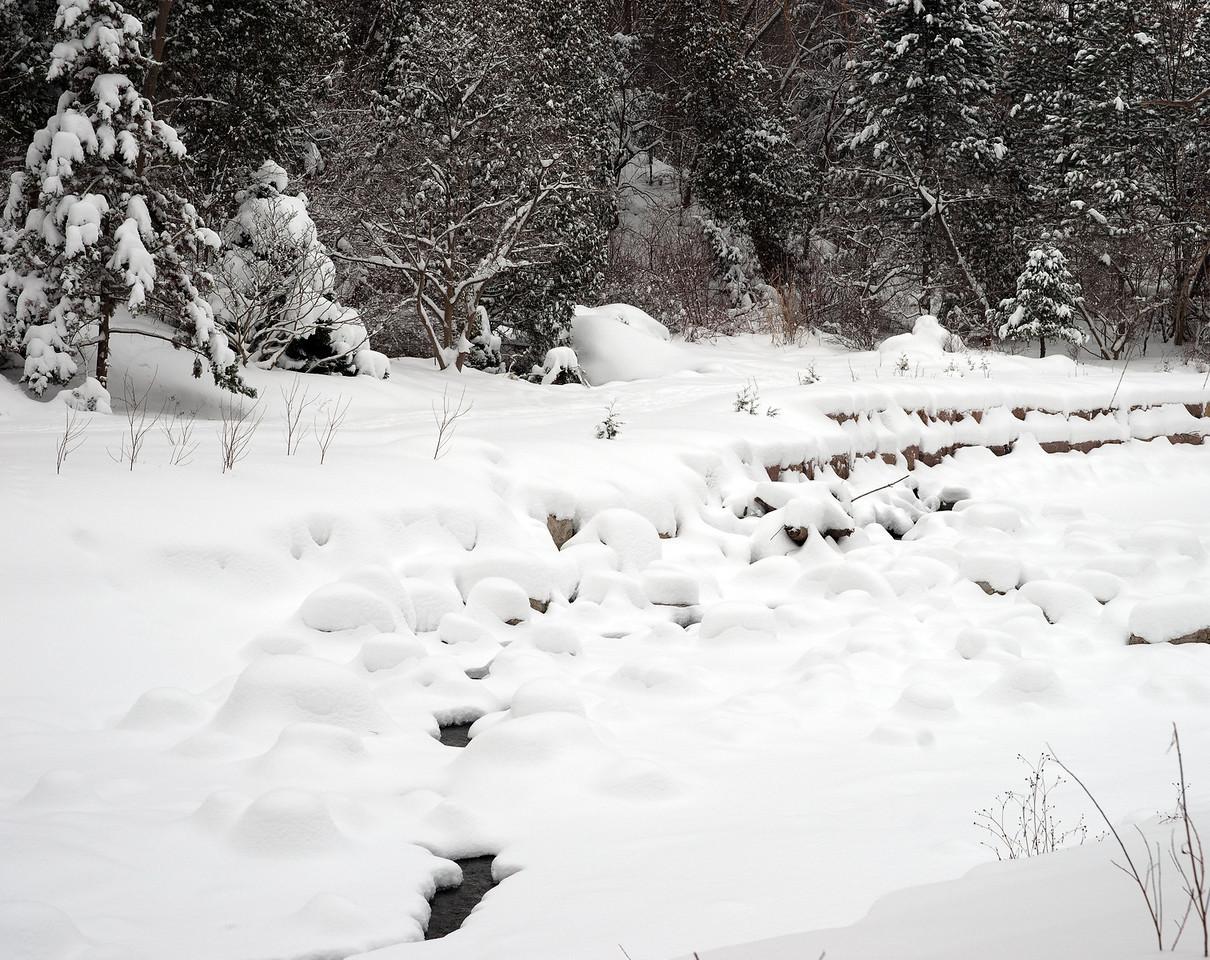 Edward Gardens 18 January - 12