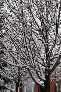 First Snow November 19 - 14