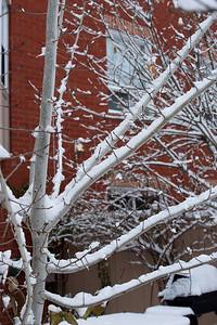 First Snow November 19 - 09