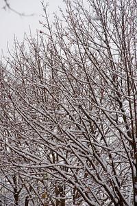 First Snow November 19 - 18