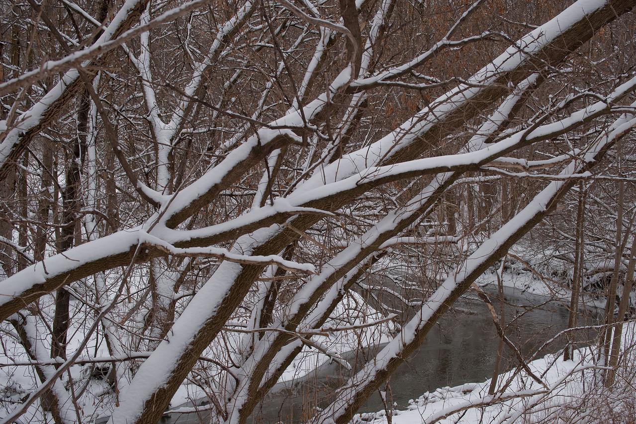 Pomona Park Mid January - 10