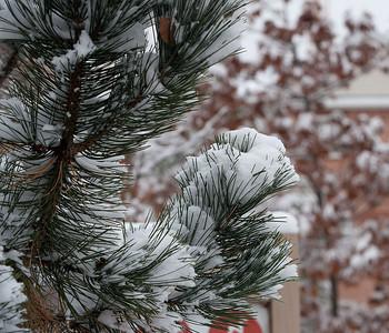 First Snow November 19 - 07