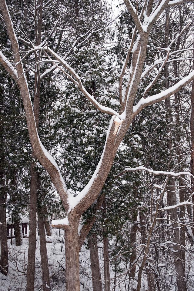 Edward Gardens 18 January - 43