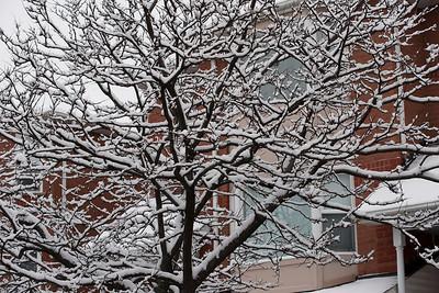 First Snow November 19 - 06