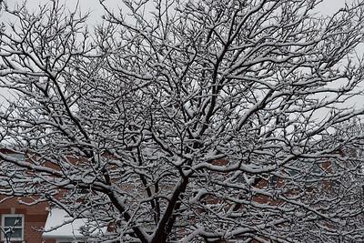 First Snow November 19 - 04