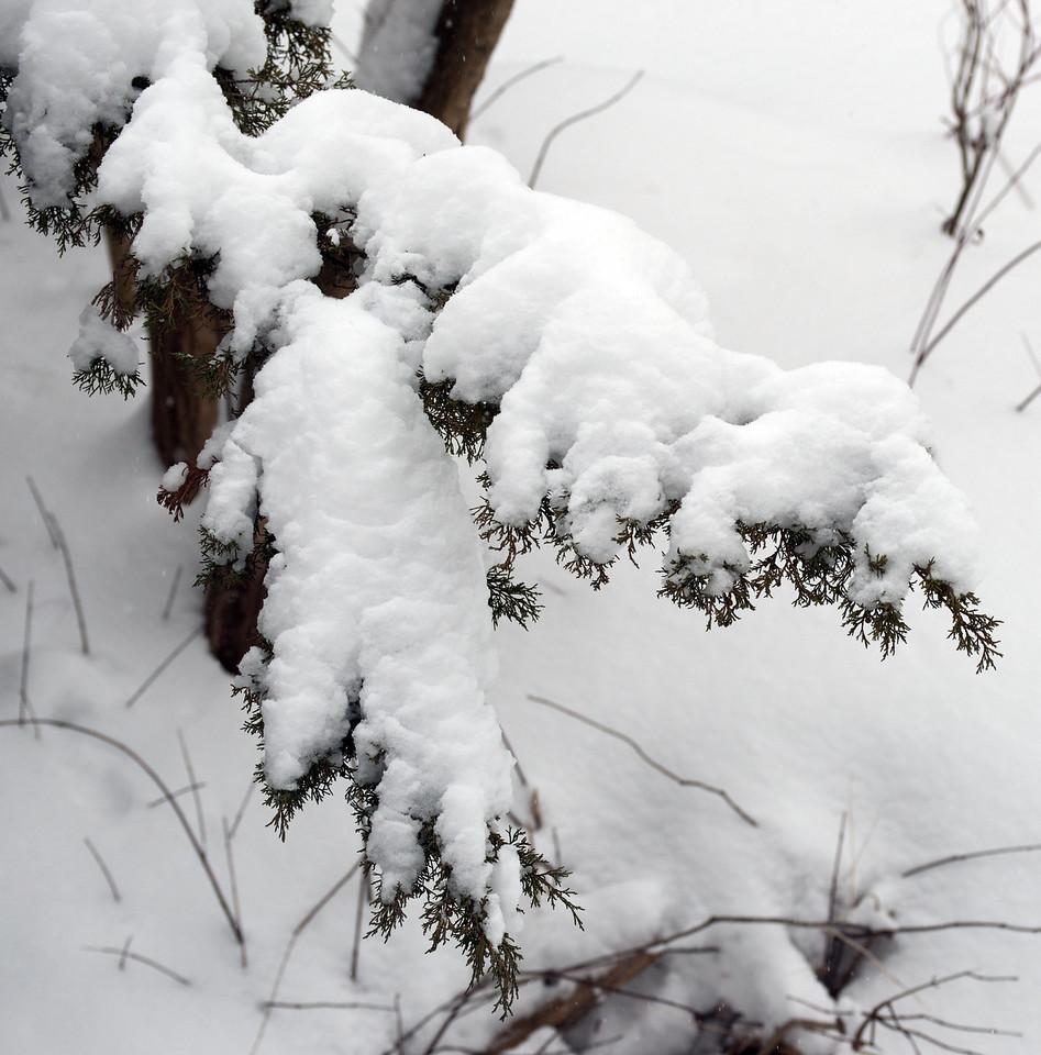 Edward Gardens 18 January - 49