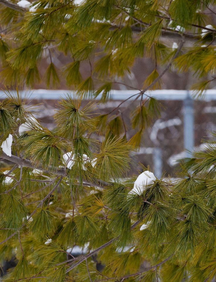 Pomona Park Mid January - 03